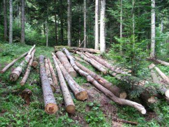 sječa šuma